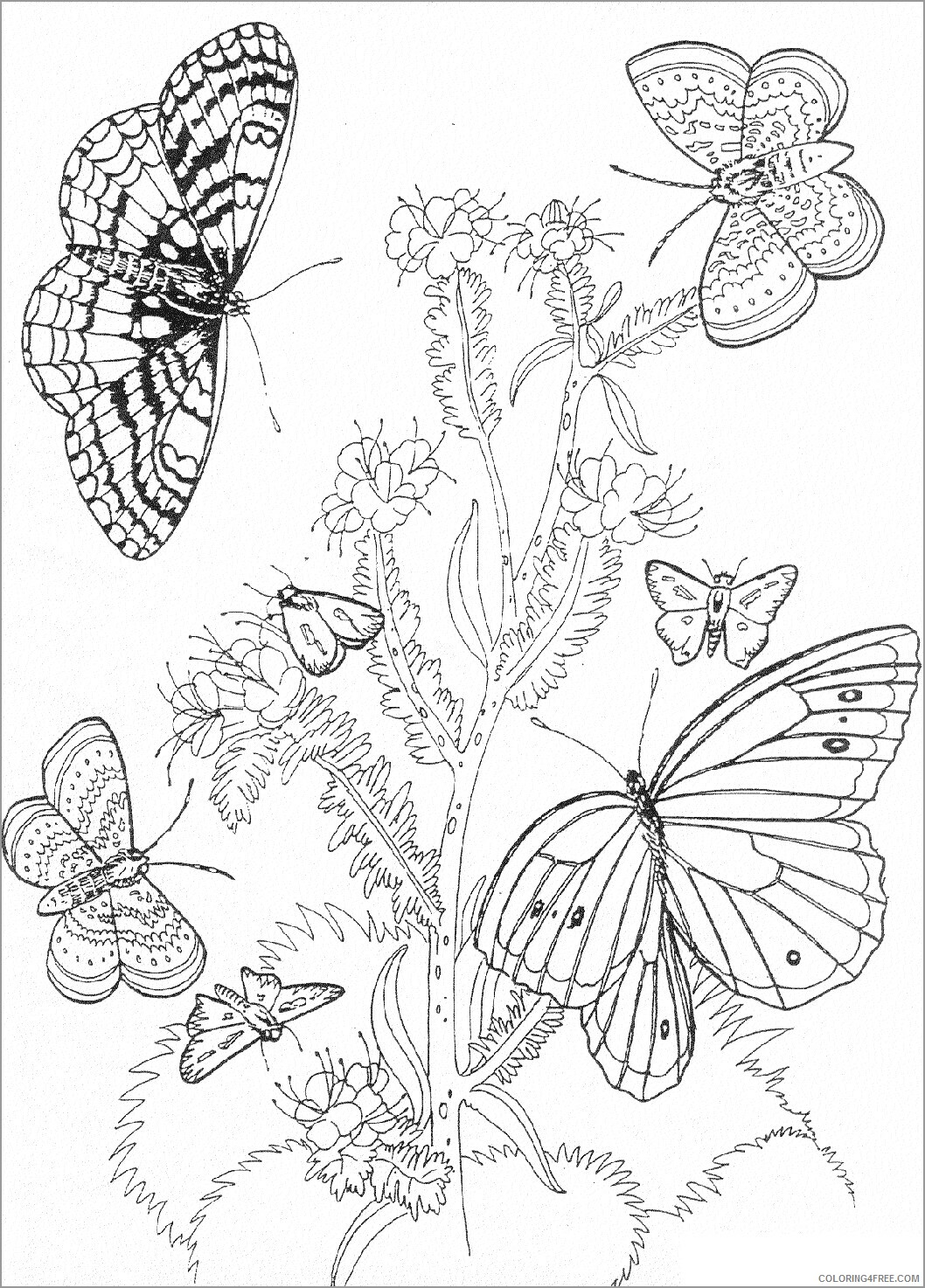 Adult Butterfly Coloring Pages butterfly and flower for adult Printable 2020 180 Coloring4free