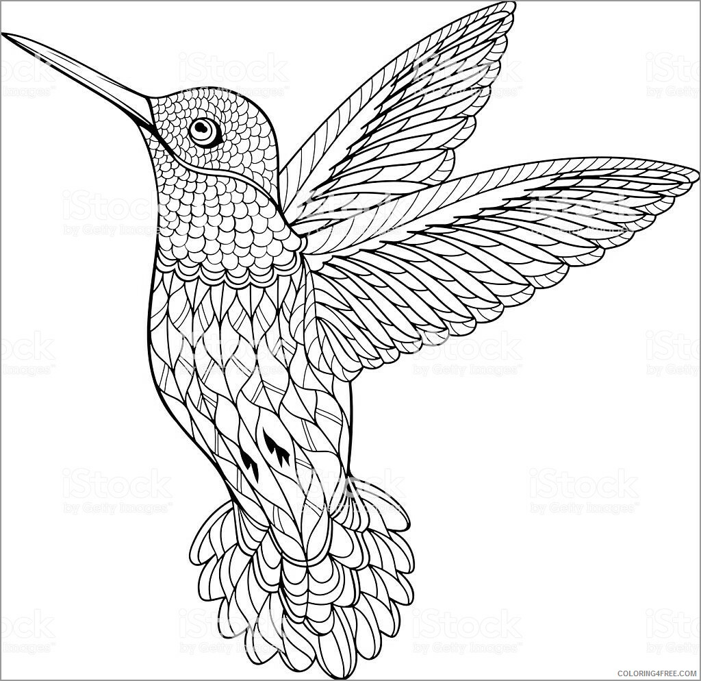 Adult Coloring Pages hummingbird for adults Printable 2020 039 Coloring4free