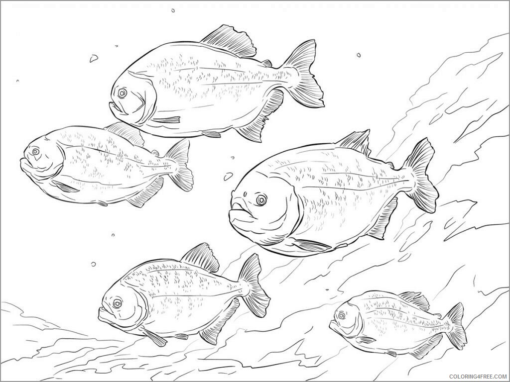 Adult Coloring Pages piranha fish for adult Printable 2020 052 Coloring4free