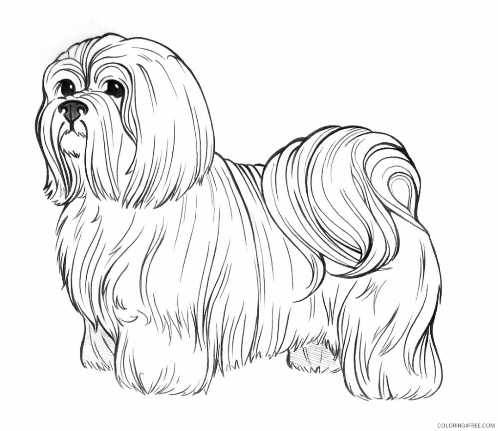 Adult Dog Coloring Pages Realistic Dog for Adults Printable 2020 237 Coloring4free