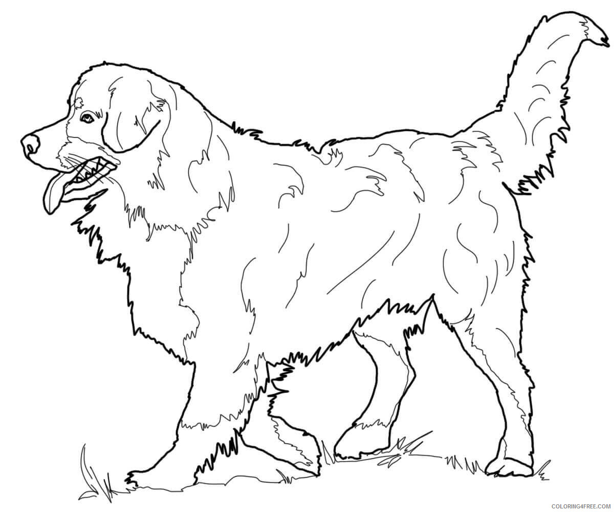 Adult Dog Coloring Pages Realistic Dog For Adults Printable 2020 238 Coloring4free Coloring4free Com