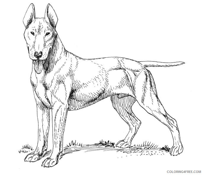 Adult Dog Coloring Pages Realistic Dog for Adults Printable 2020 239 Coloring4free