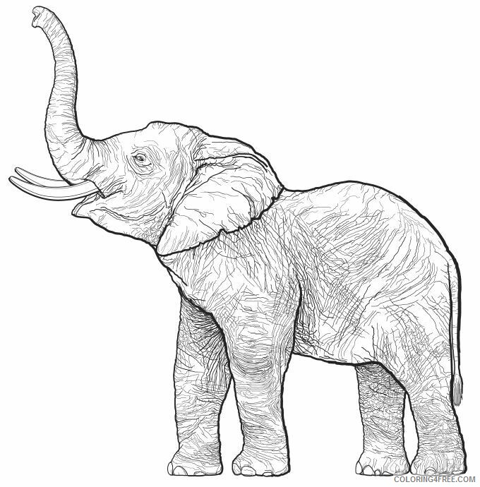 Adult Elephant Coloring Pages Realistic Elephant for Adults Printable 2020 284 Coloring4free