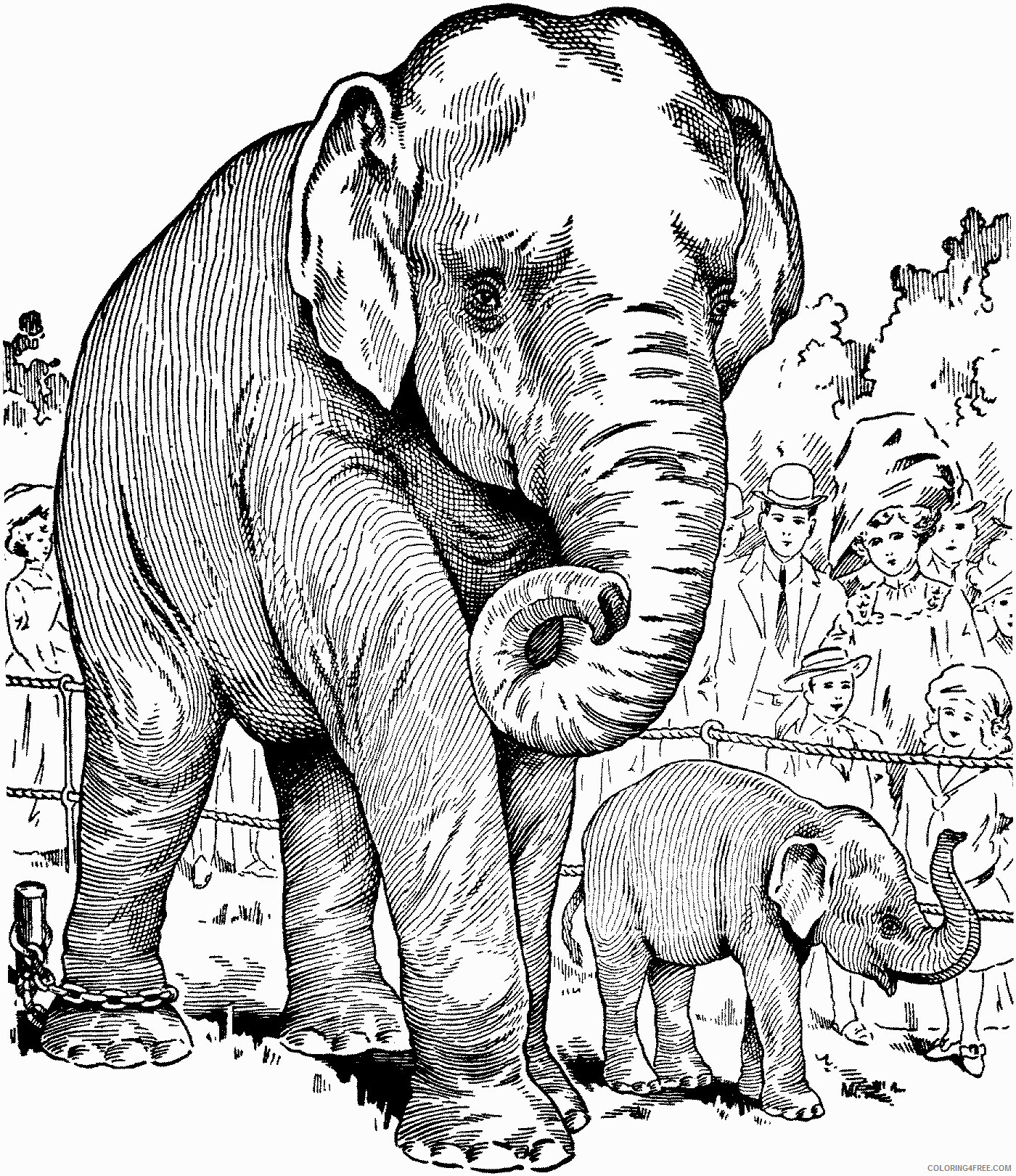Adult Elephant Coloring Pages Realistic Mother and Child Sheet Printable 2020 286 Coloring4free