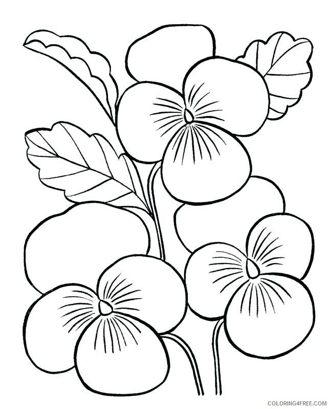 Adult Floral Coloring Pages Easy Flower for Adults Printable 2020 322 Coloring4free