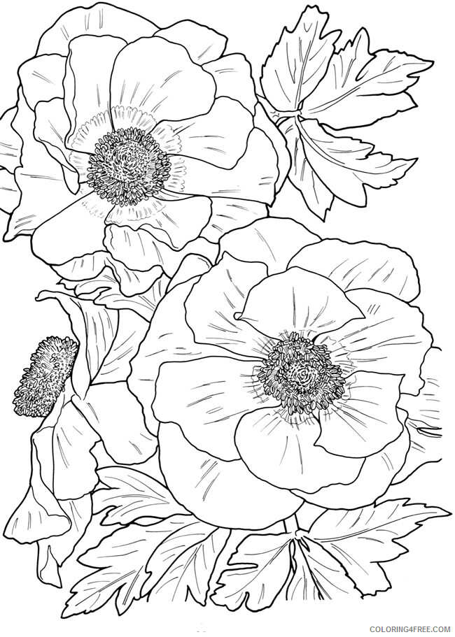 Adult Floral Coloring Pages Flower for Adults Printable 2020 359 Coloring4free