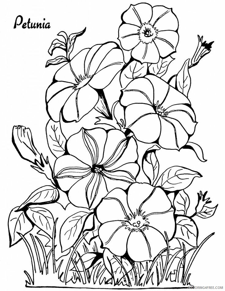 Adult Floral Coloring Pages Petunia Floral For Adults Printable 2020 372 Coloring4free