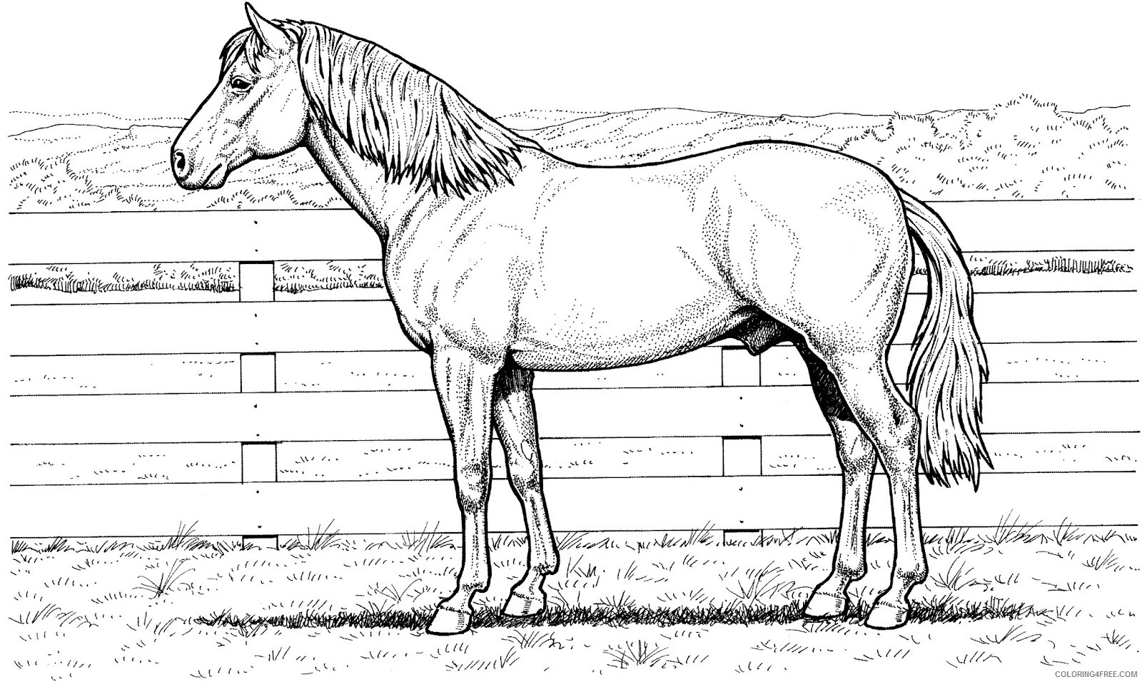 Adult Horse Coloring Pages Realistic Horse for Adults Printable 2020 421 Coloring4free