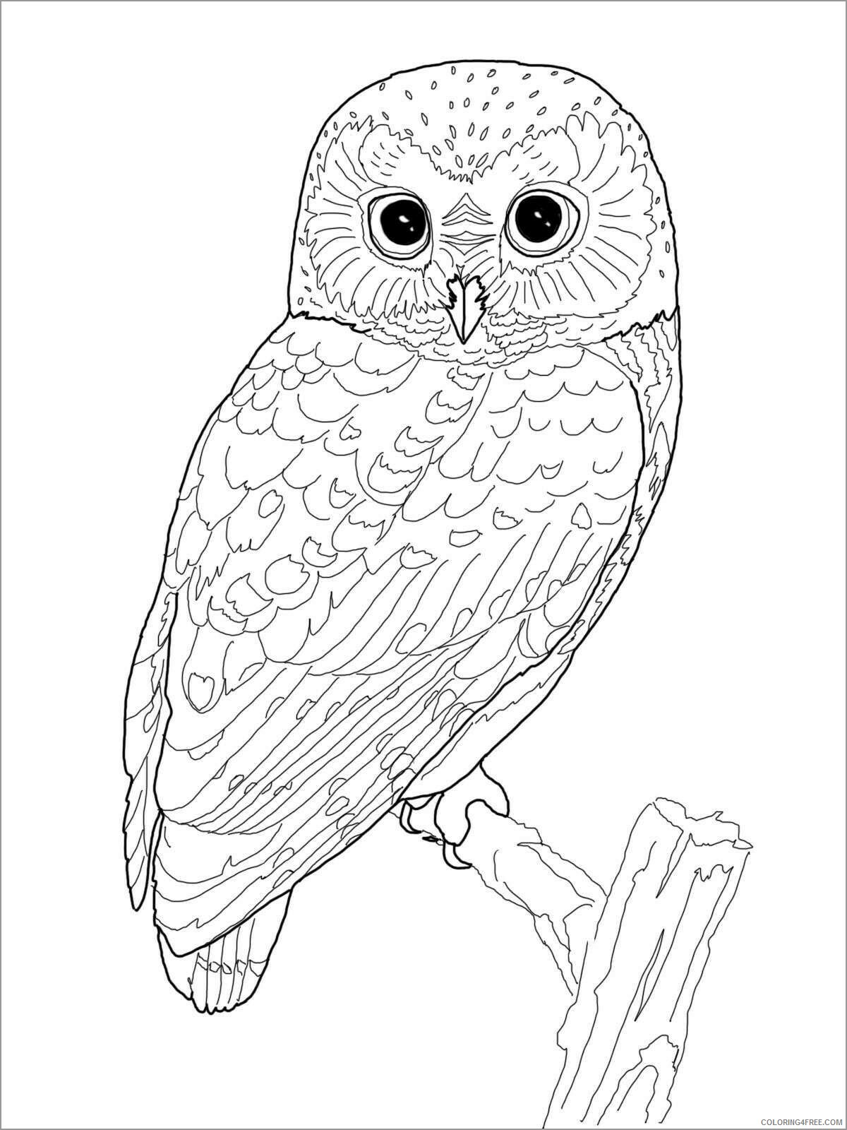 Adult Owl Coloring Pages owl for adults Printable 2020 434 Coloring4free