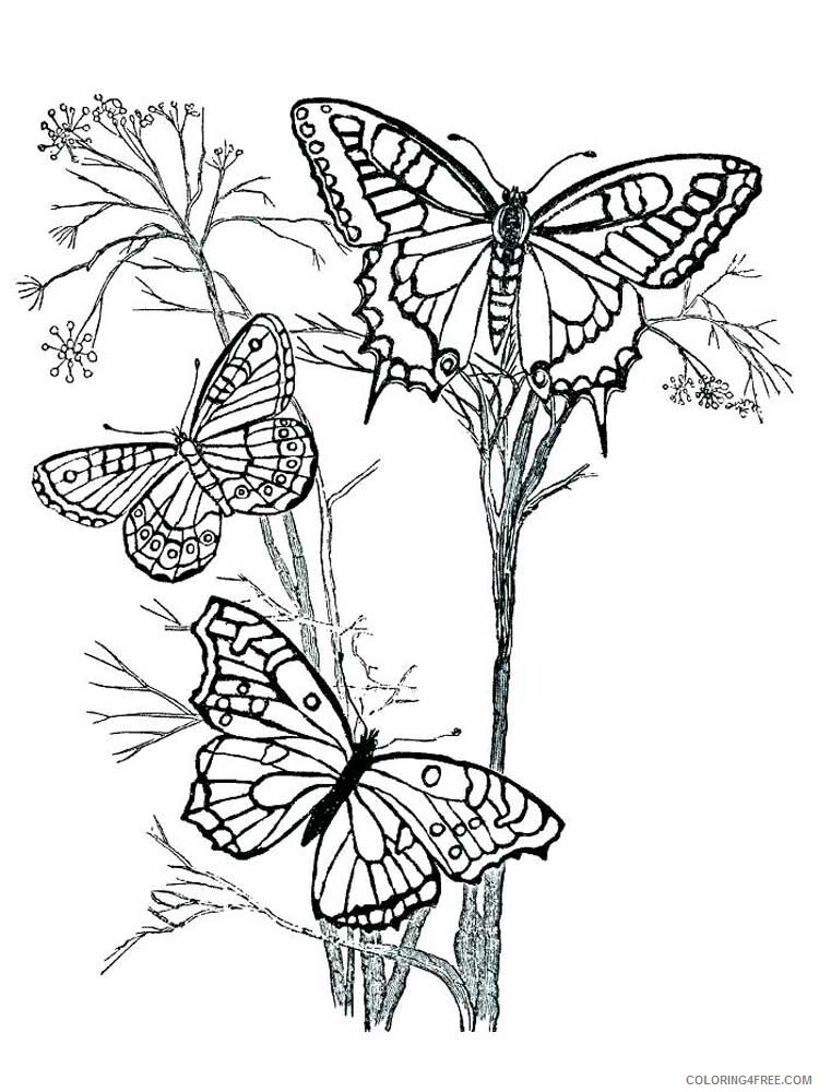 Butterfly for Adults Coloring Pages butterfly for adults 22 Printable 2020 542 Coloring4free