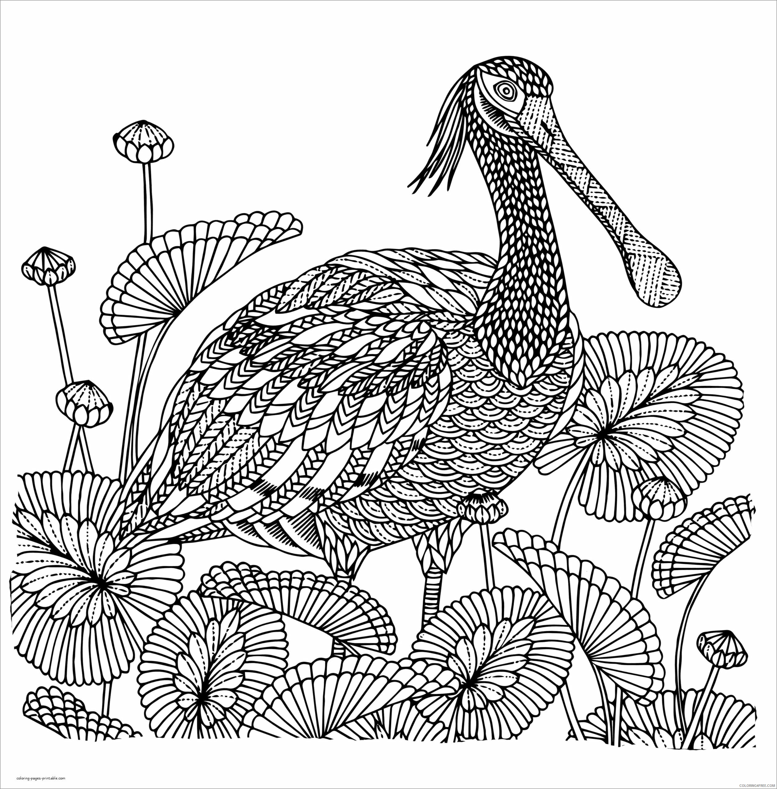 Detailed Coloring Pages Adult detailed bird Printable 2020 275 Coloring4free
