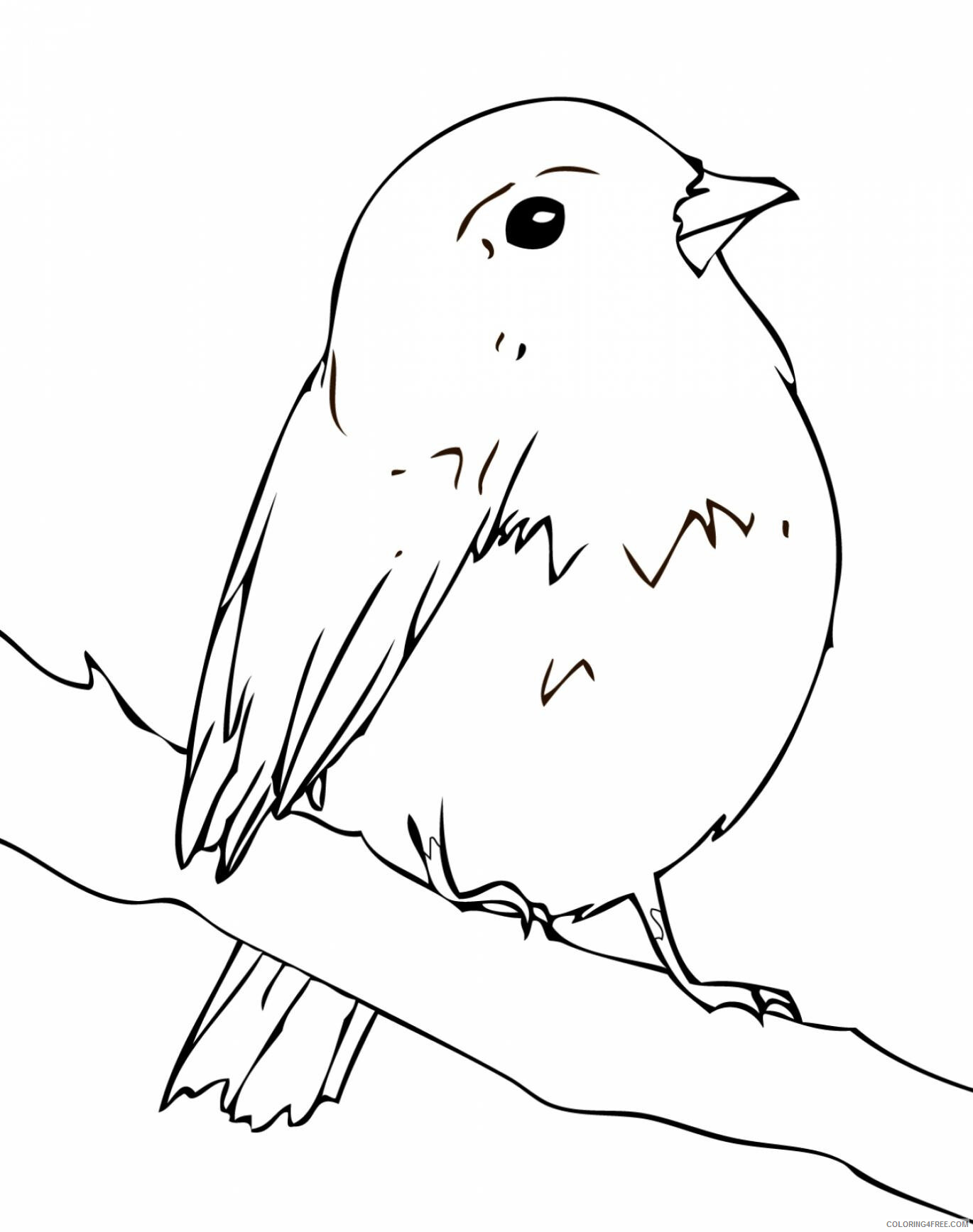 Simple Coloring Pages for Kids Simple Robin Bird Printable 2021 600 Coloring4free