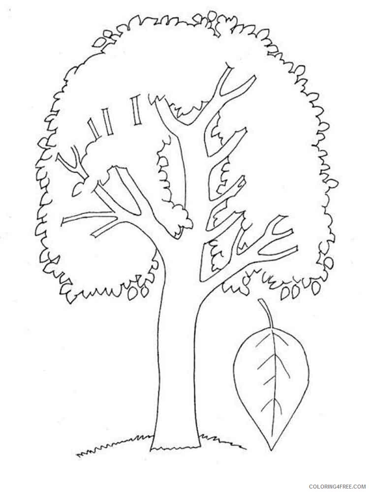 Poplar Tree Coloring Pages Tree Nature poplar tree 3 Printable 2021 612 Coloring4free