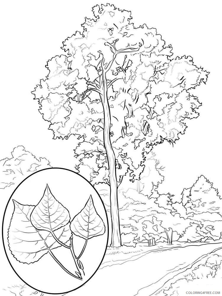 Poplar Tree Coloring Pages Tree Nature poplar tree 4 Printable 2021 613 Coloring4free