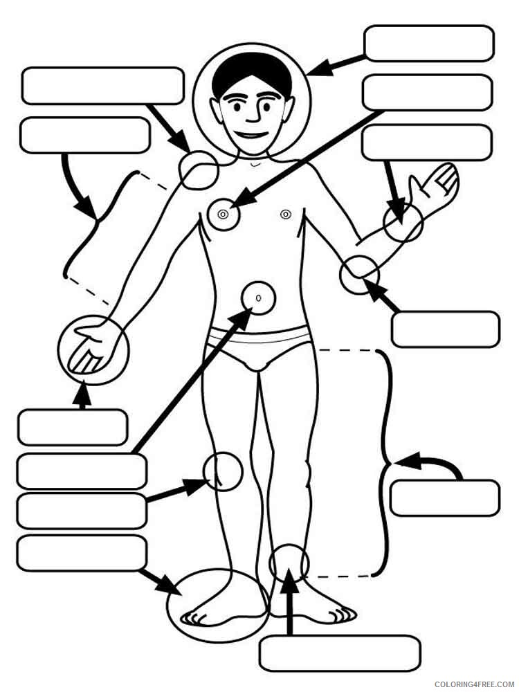 Human Coloring Pages educational human body 1 Printable 2021 3455 Coloring4free