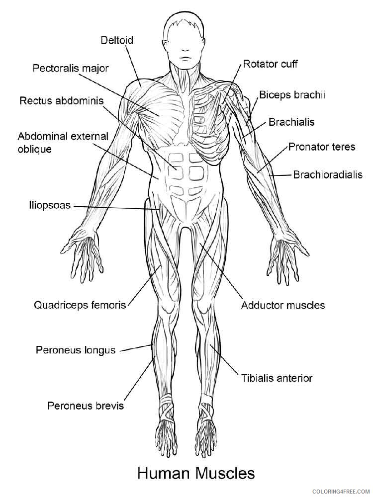 Human Coloring Pages educational human body 12 Printable 2021 3456 Coloring4free