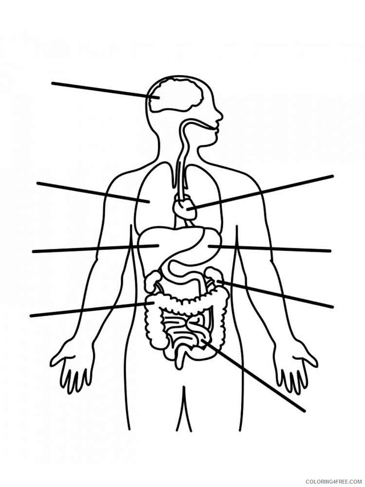 Human Coloring Pages educational human body 9 Printable 2021 3458 Coloring4free