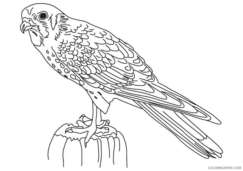Falcon Coloring Sheets Animal Coloring Pages Printable 2021 1601 Coloring4free