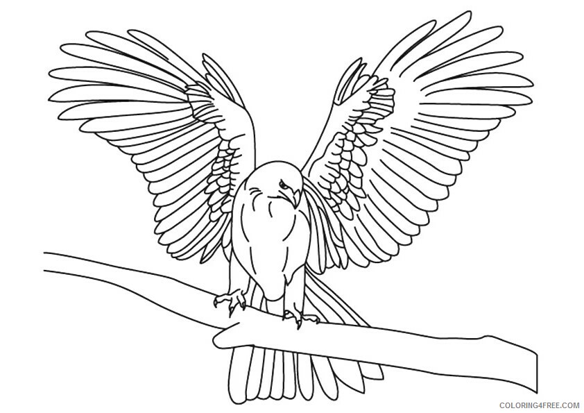 Falcon Coloring Sheets Animal Coloring Pages Printable 2021 1602 Coloring4free