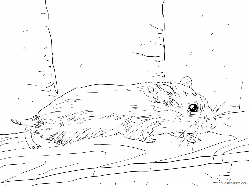 Hamster Coloring Pages Animal Printable Sheets Hamster animal 341 2021 2569 Coloring4free