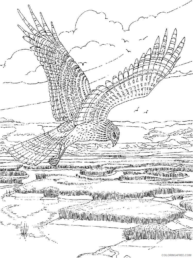 Hawk Coloring Pages Animal Printable Sheets Hawks birds 13 2021 2611 Coloring4free