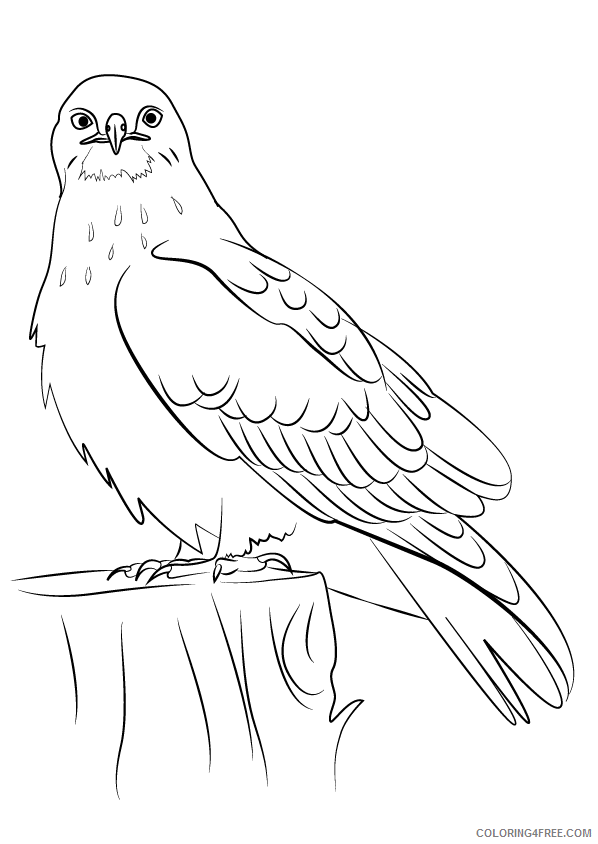 Hawk Coloring Sheets Animal Coloring Pages Printable 2021 2311 Coloring4free