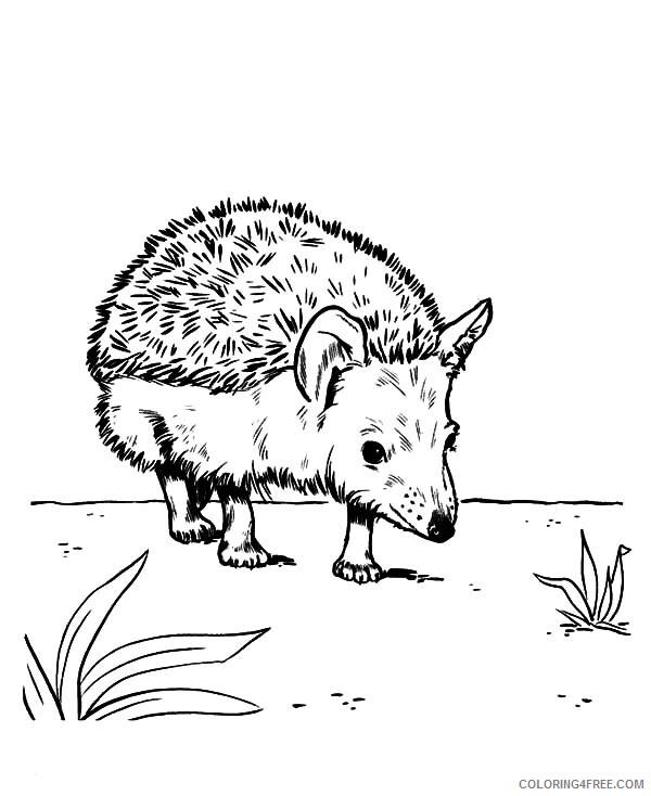 Hedgehog Coloring Pages Animal Printable Sheets Walking Around 2021 Coloring4free