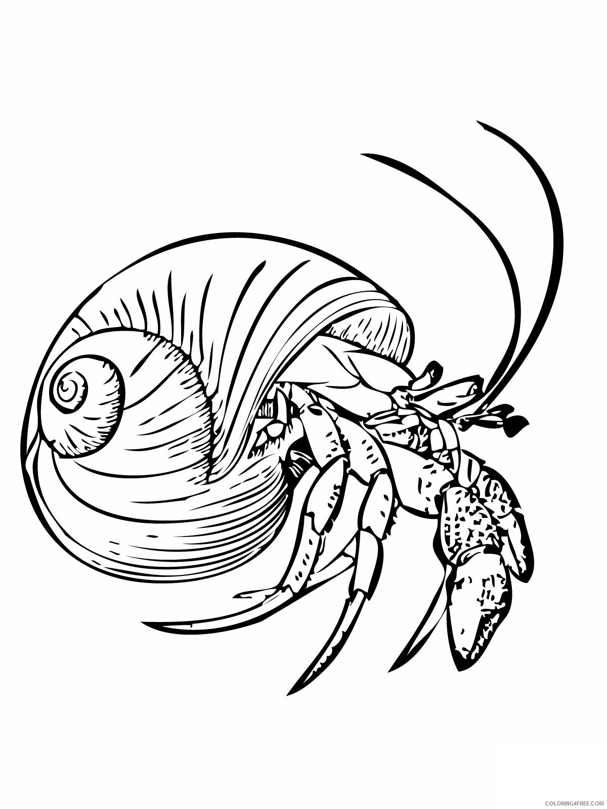 Hermit Crab Coloring Pages Animal Printable Sheets Hermit Crab 2021 2654 Coloring4free