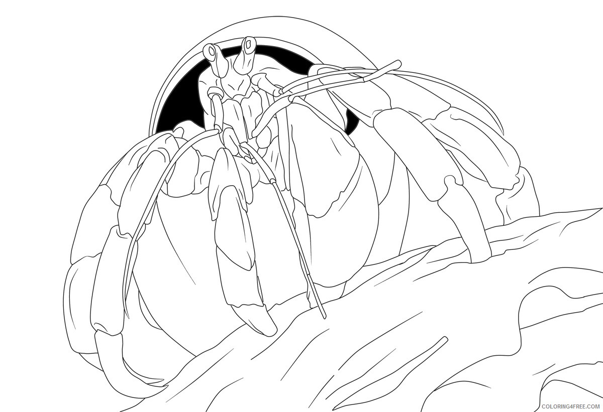 Hermit Crab Coloring Pages Animal Printable Sheets Hermit Crab Free 2021 2664 Coloring4free