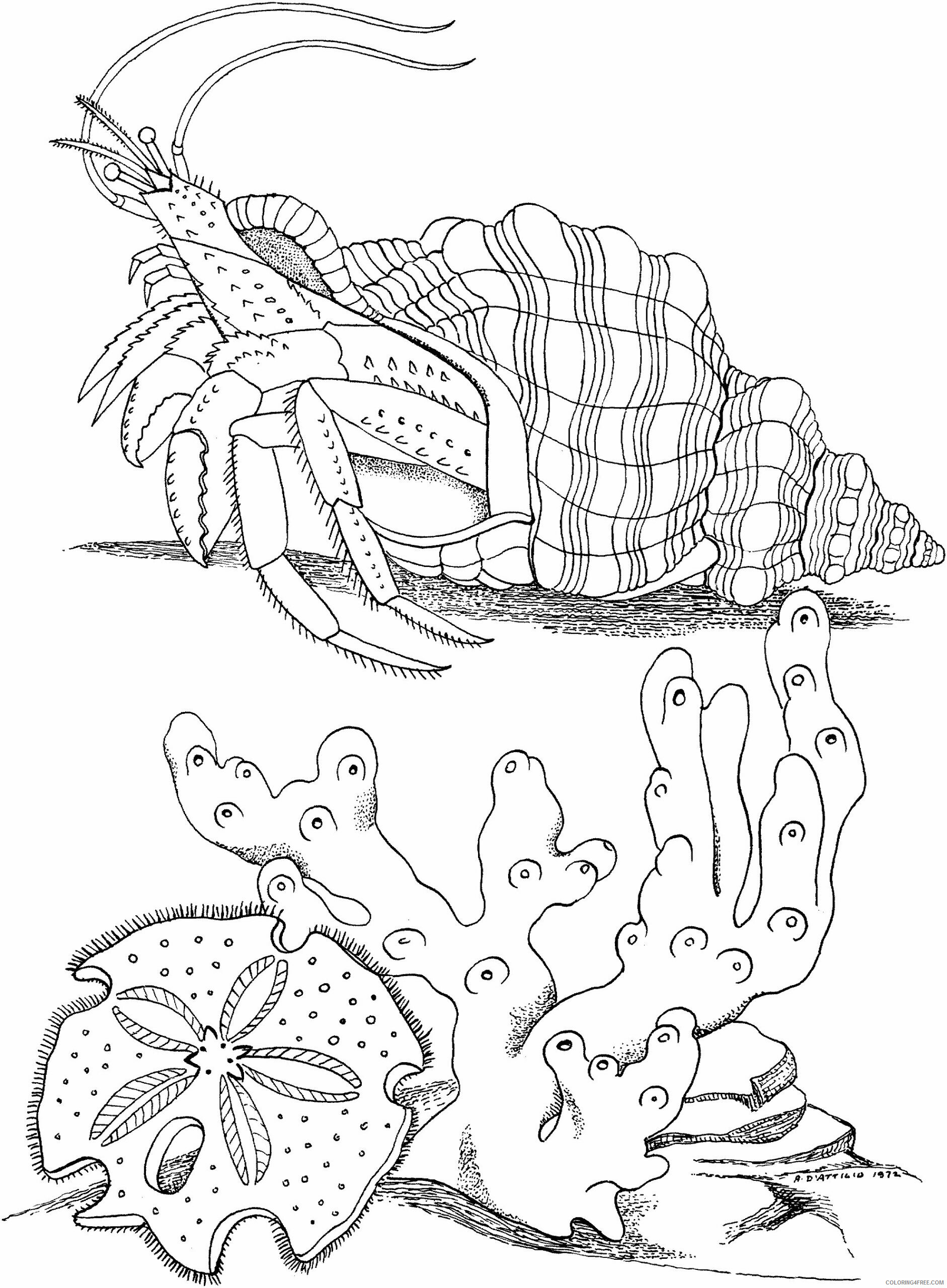 Hermit Crab Coloring Pages Animal Printable Sheets Hermit Crab To Print 2021 2666 Coloring4free