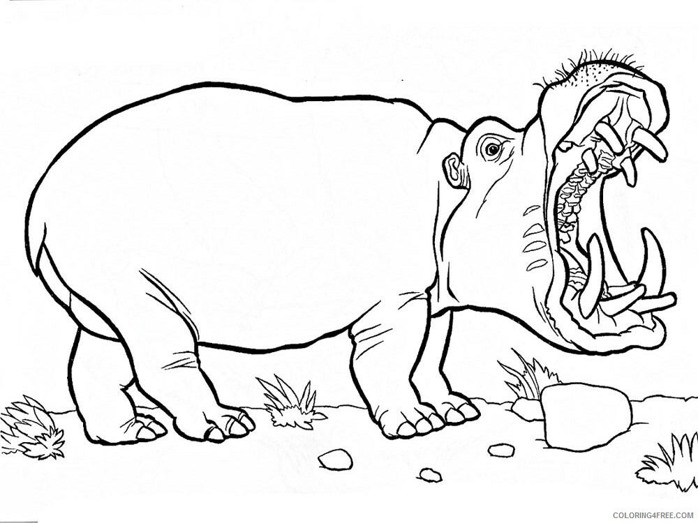 Hippopotamus Coloring Pages Animal Printable Sheets 348 2021 2712 Coloring4free