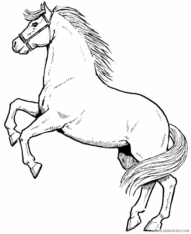 Horse Coloring Sheets Animal Coloring Pages Printable 2021 2401  Coloring4free - Coloring4Free.com