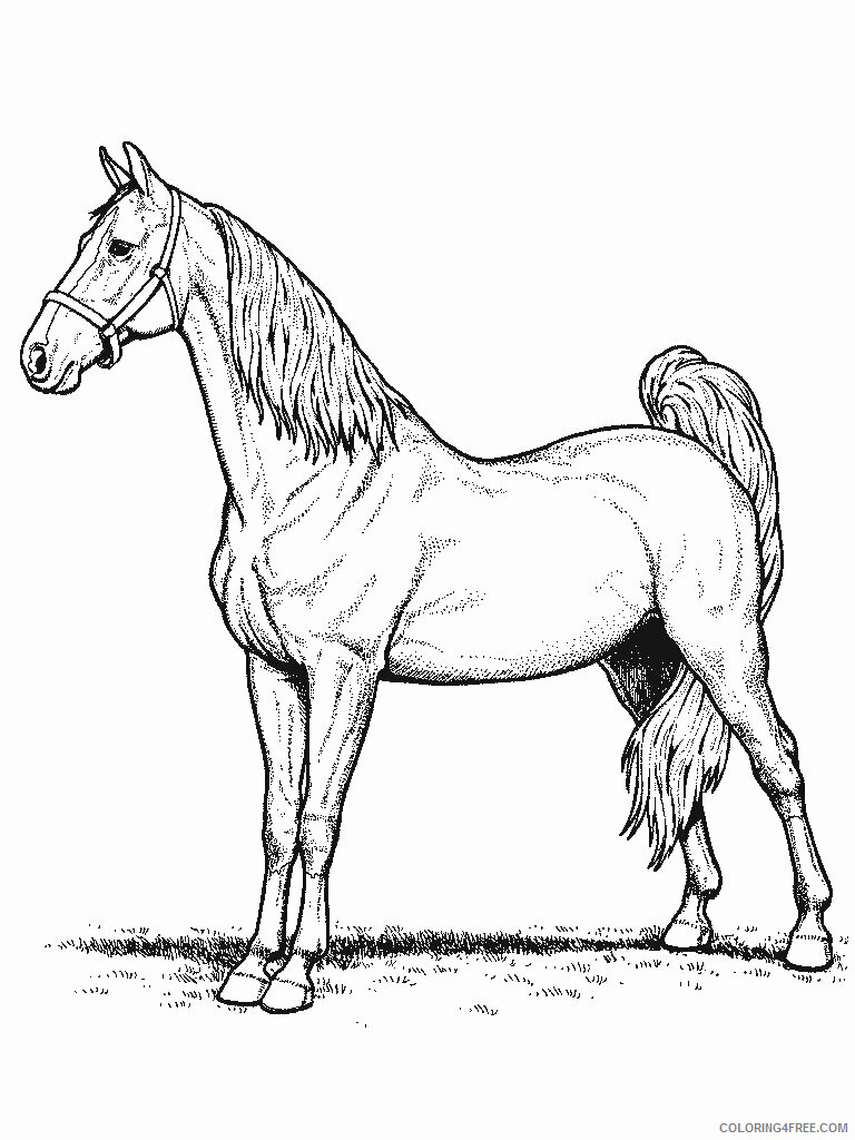 Horses Coloring Pages Animal Printable Sheets Horse 2021 2759 Coloring4free