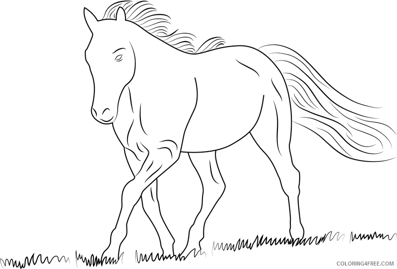 Horses Coloring Pages Animal Printable Sheets white horse1 2021 2814 Coloring4free