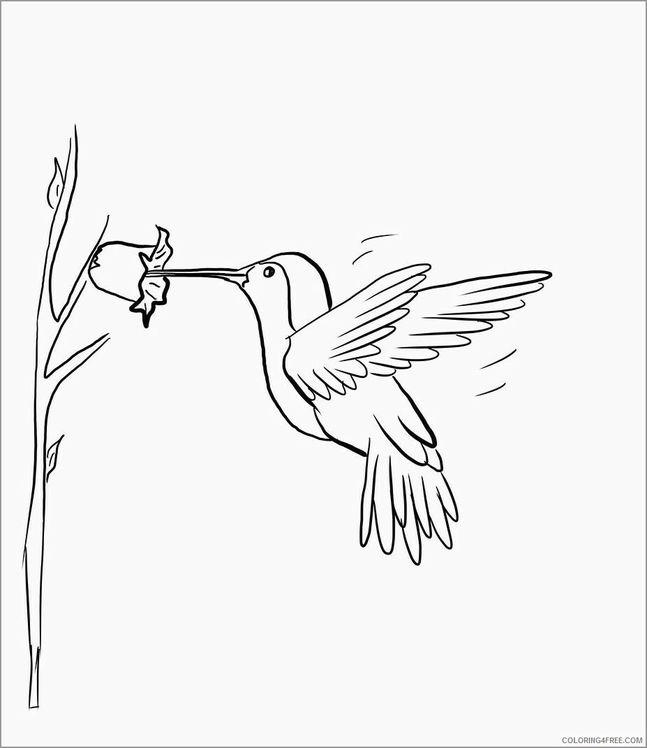 Hummingbirds Coloring Pages Animal Printable Sheets cute hummingbird 2021 2817 Coloring4free