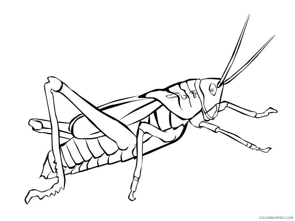 Insect Coloring Pages Animal Printable Sheets Insect 47 2021 2886 Coloring4free