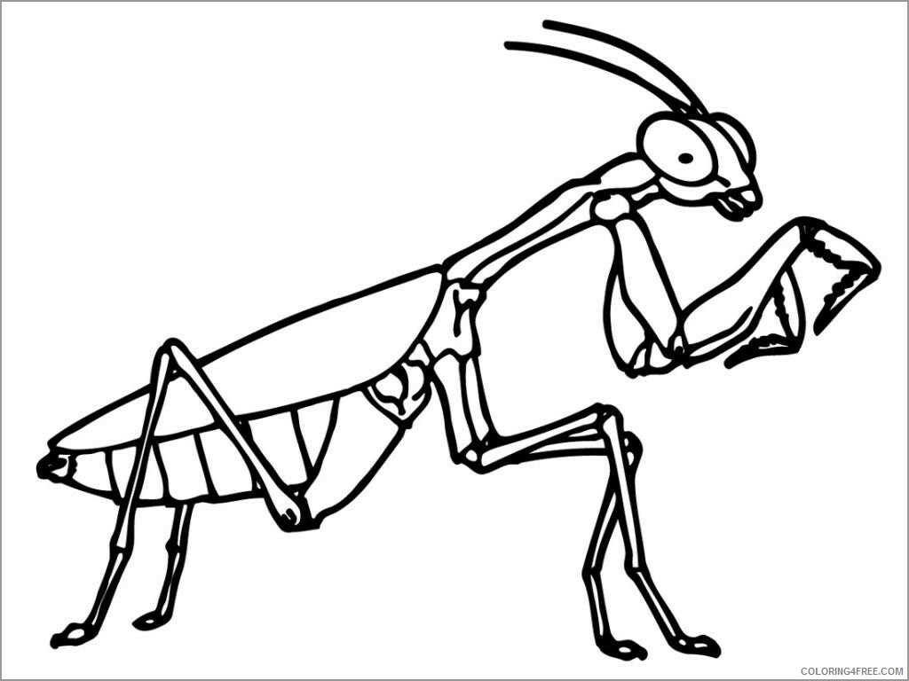 Insect Coloring Pages Animal Printable Sheets insect to print 2021 2892 Coloring4free