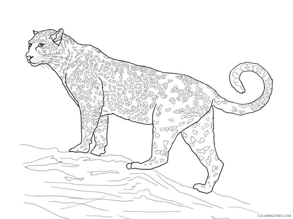 Jaguar Coloring Pages Animal Printable Sheets jaguar 10 2021 2909 Coloring4free