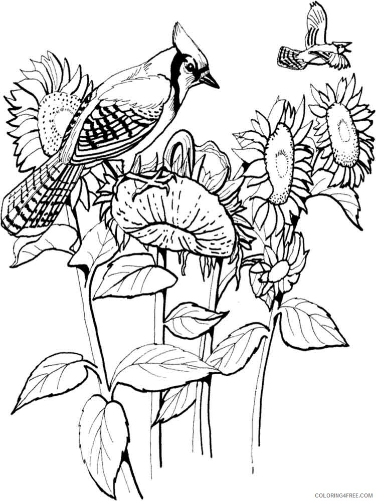 Jay Coloring Pages Animal Printable Sheets Jay birds 4 2021 2920 Coloring4free