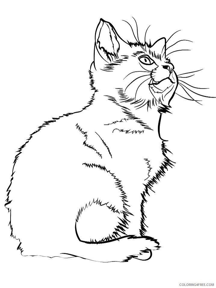 Kitten Coloring Pages Animal Printable Sheets kitten 4 2021 2996 Coloring4free