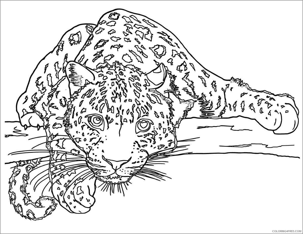Leopard Coloring Pages Animal Printable Sheets leopard on tree 2021 3143 Coloring4free