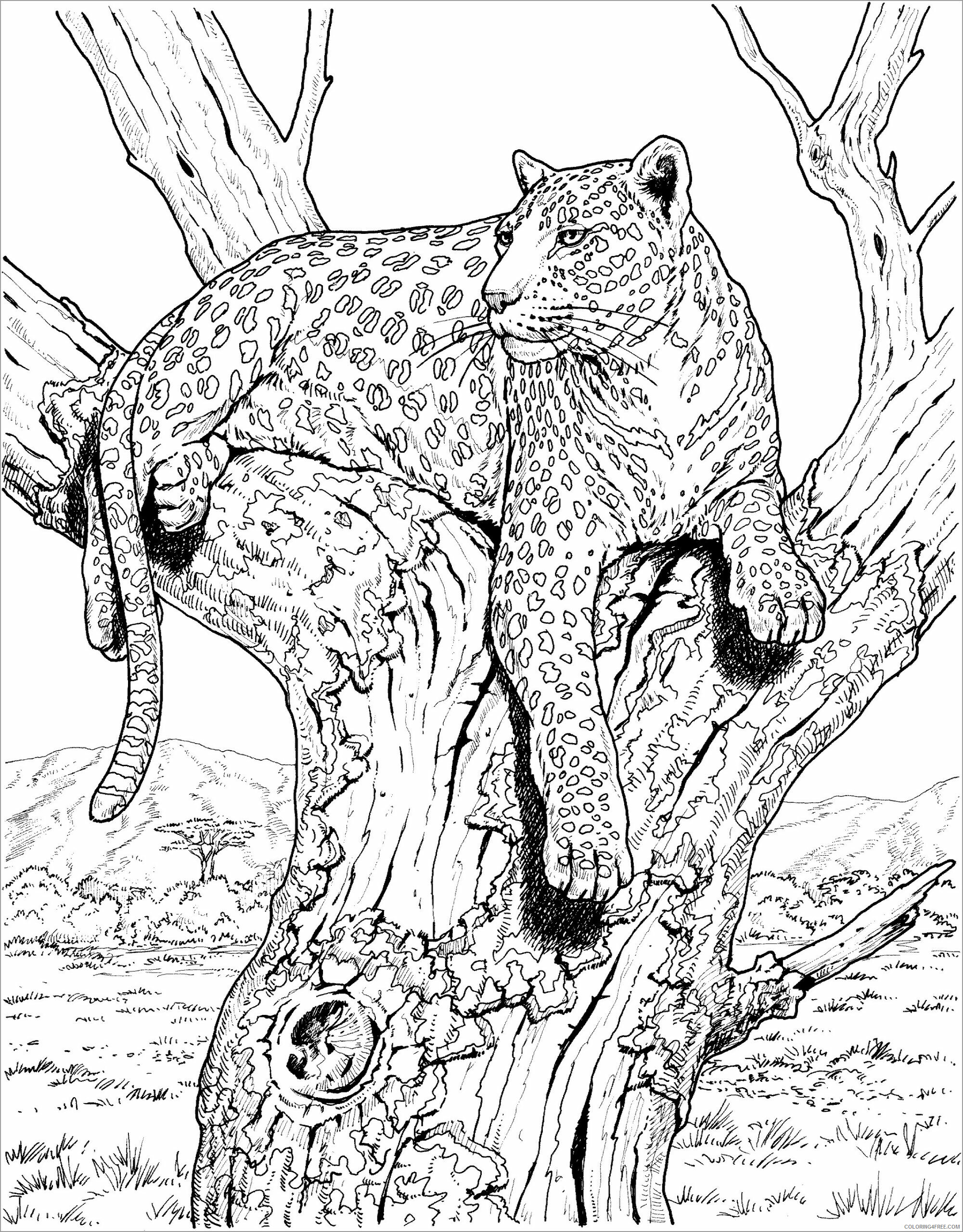 Leopard Coloring Pages Animal Printable Sheets snow leopard free 2021 3146 Coloring4free
