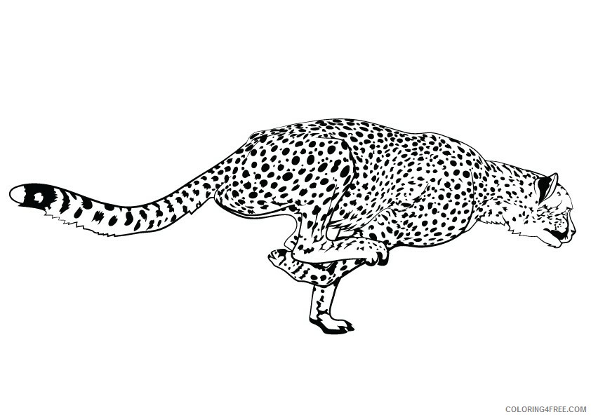 Leopard Coloring Sheets Animal Coloring Pages Printable 2021 2812 Coloring4free