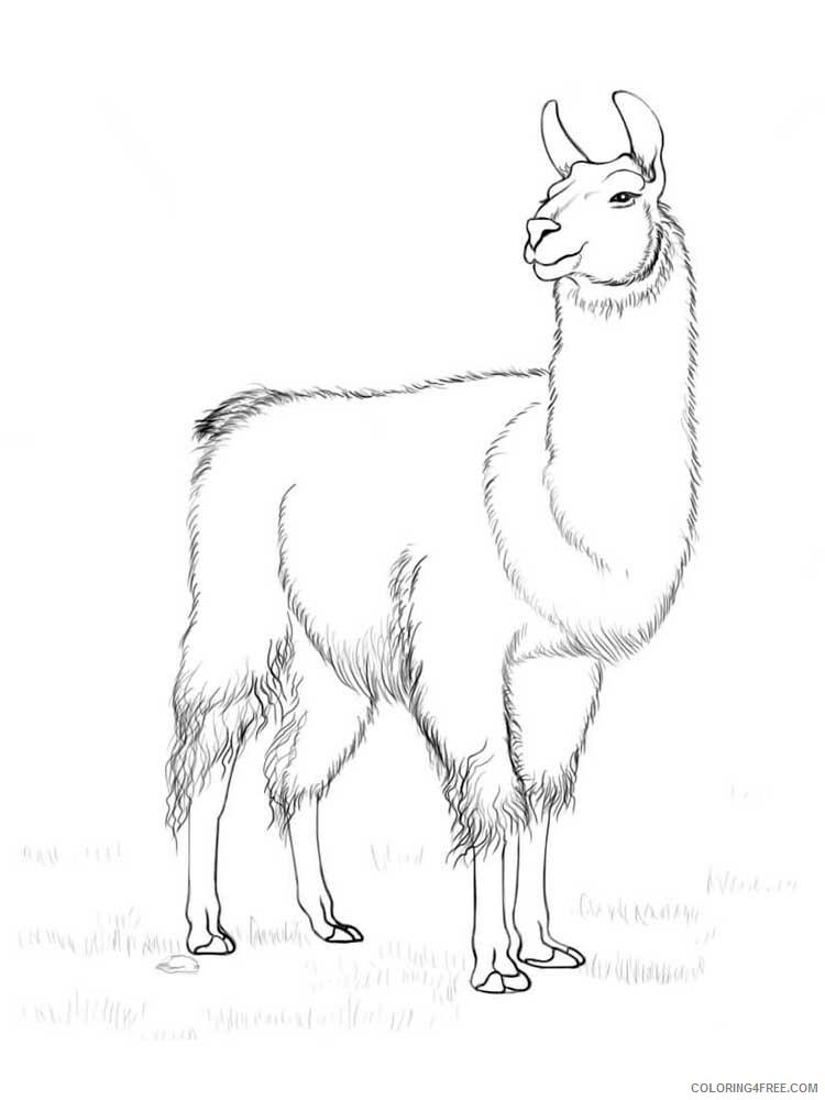 Llama Coloring Pages Animal Printable Sheets Llama 2 2021 3233 Coloring4free