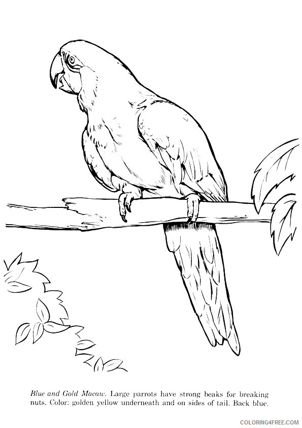 Macaw Coloring Sheets Animal Coloring Pages Printable 2021 2895 Coloring4free