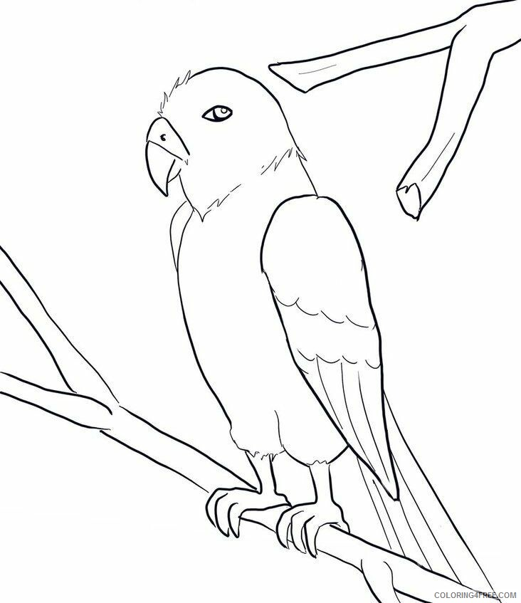 Macaw Coloring Sheets Animal Coloring Pages Printable 2021 2896 Coloring4free