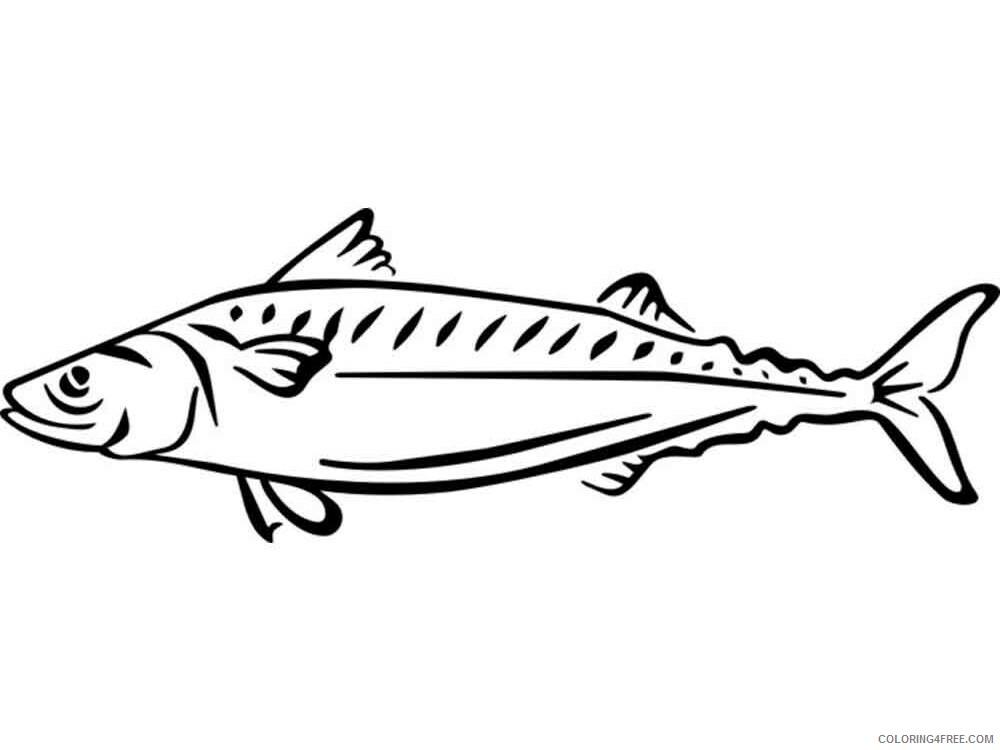 Mackerels Coloring Pages Animal Printable Sheets Mackerels 4 2021 3265 Coloring4free