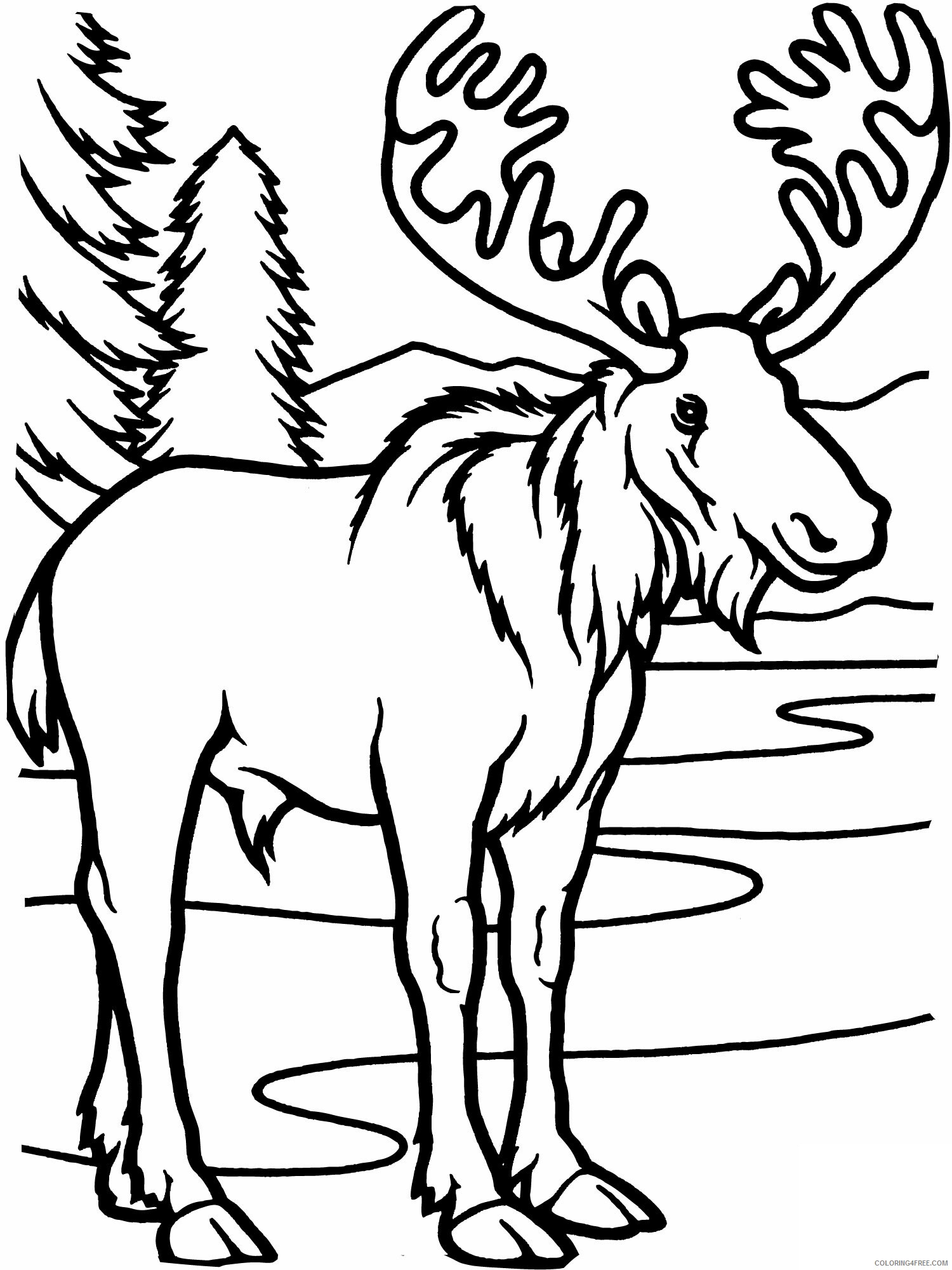 Moose Coloring Pages Animal Printable Sheets Bull Moose 2021 3364 Coloring4free