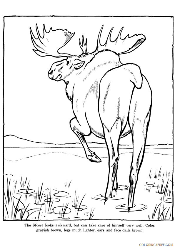Moose Coloring Sheets Animal Coloring Pages Printable 2021 2903 Coloring4free