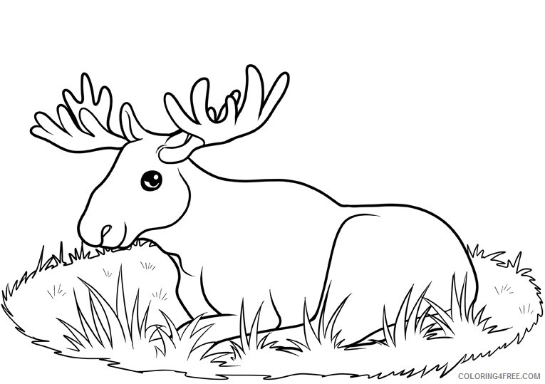 Moose Coloring Sheets Animal Coloring Pages Printable 2021 2919 Coloring4free